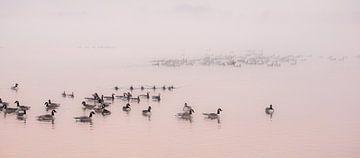 Birds von Dirk van Egmond