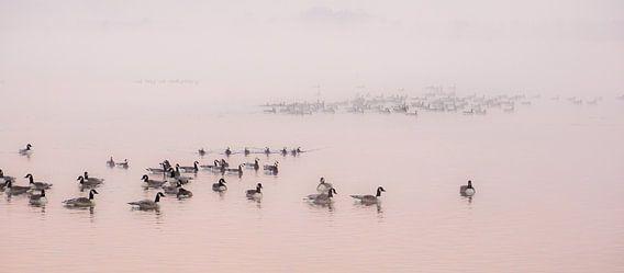Birds van Dirk van Egmond