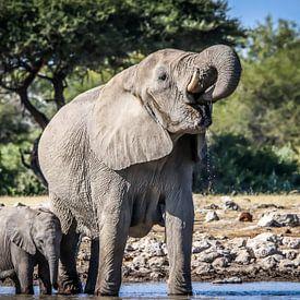 Olifanten familie geniet van het verkoelende water van Original Mostert Photography