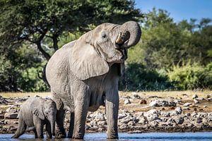 Olifanten familie geniet van het verkoelende water