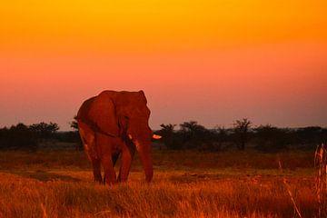 Chillende olifant von Ger&Wil van de Bovenkamp