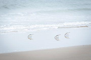 Drie strandlopers langs de kust van Simone Janssen