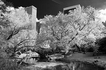 New York Central Park von Kurt Krause