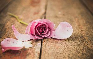 Rose roos van