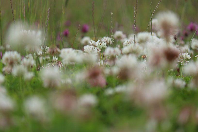 Holland`s Bloemenveld van Paul Franke