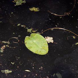 Abstract beeld van lelieblad in donkere gracht van Marianne van der Zee