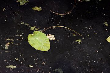 Abstraktes Bild eines Seerosenblattes im dunklen Graben von Marianne van der Zee