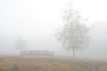 Nebel am Morgen von Herman Peters