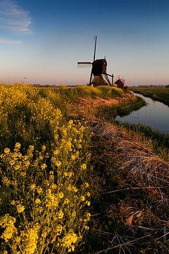 Mühle zwischen der Rapssaat von Halma Fotografie