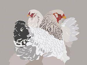 Brahma kippen van Richard van den Hoek
