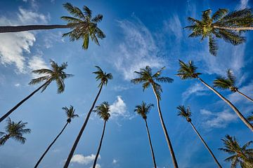 Palmbomen tegen een blauwe hemel van Graham Forrester