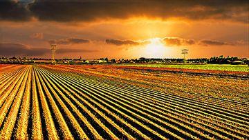 Goldenes Ackerland von Digital Art Nederland