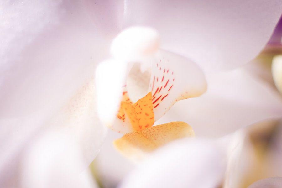 Closeup van wit roze orchidee van Mike Attinger