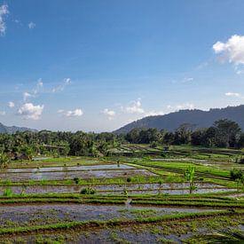 Tropisch rijstveld in het noorden van Bali, Indonesië van Tjeerd Kruse