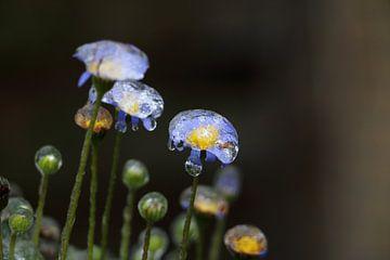 Gefrorene Blumen im Winter von Henk Hulshof
