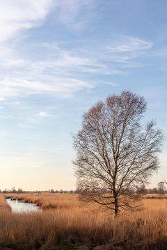 Herbstlandschaft von Anjo ten Kate