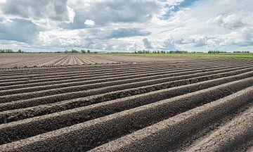 Aardappelruggen in een Nederlands polderlandschap van Ruud Morijn