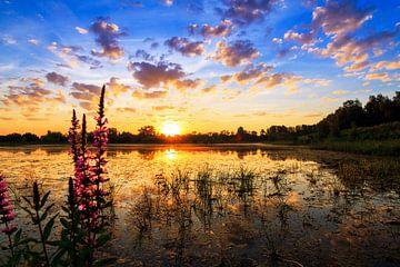 Lupine zonsopkomst van Dennis van de Water