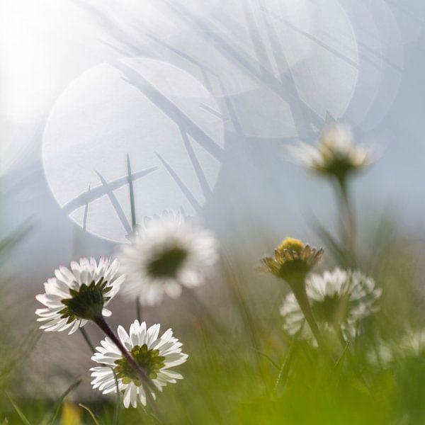 Simple flower van Petra Slingenberg