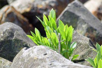 Het mooie groen tussen de rotsen van Lendy Fotografie .