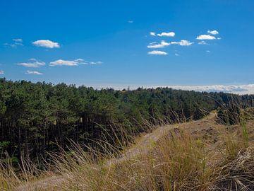 Uitzicht vanaf duin, Terschelling van Rinke Velds