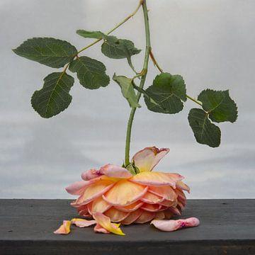 Roos in de nazomer