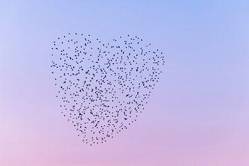Liebe in der Luft. von