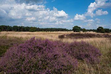 Heidelandschap op de Veluwe 02 von Cilia Brandts