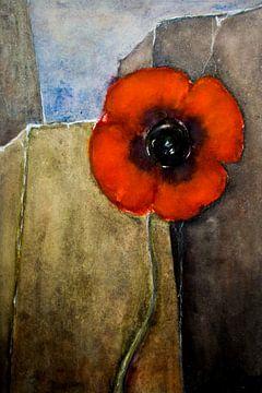Roter Mohn - Mauerblümchen von Christine Nöhmeier