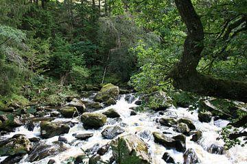 Rivier in het bos 2 van Floortje Mink