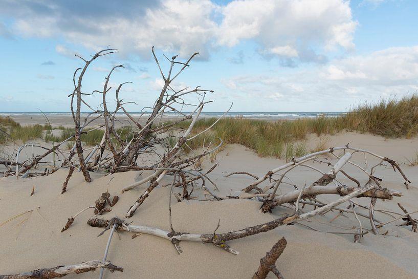Dode takken in de duinen van Tonko Oosterink
