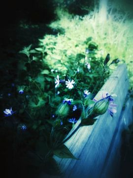 Blumen über der Bank von Elo Mars