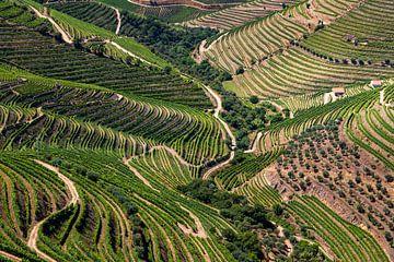Trauben im Douro-Tal von Antwan Janssen
