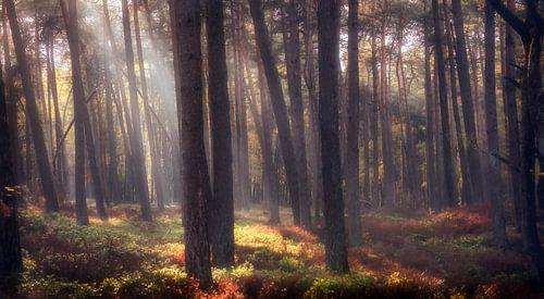 Bos in prachtig licht