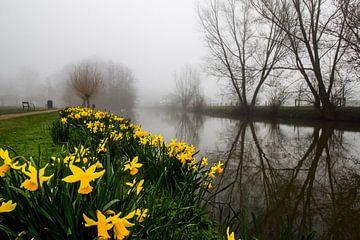 Narcissen tijdens mist langs de Kromme Rijn sur Arthur Puls Photography