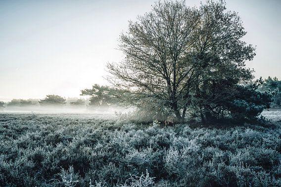 Winter dromen