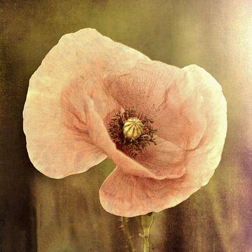 rosa Mohnblume von Yvonne Blokland