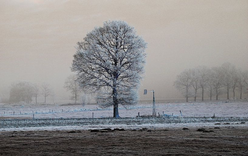 koude eenzaamheid von Wim Dubbelman