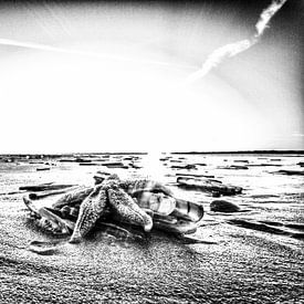 Ster op het strand van Foto van Anno