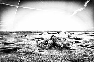 Ster op het strand van