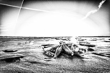 Ster op het strand von Foto van Anno