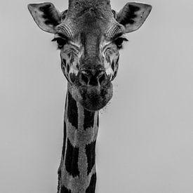 Zwart-wit portret van een giraf van Adri Vollenhouw