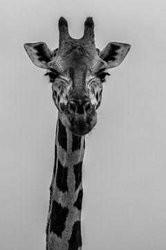 Portrait en noir et blanc d'une girafe sur Adri Vollenhouw
