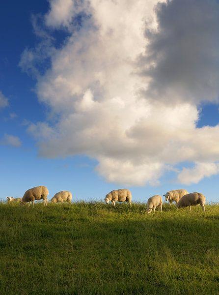 Sheep van Martijn Schornagel