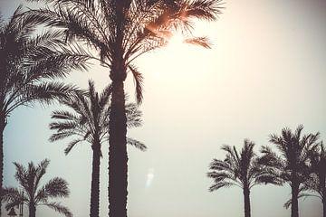 Palmbomen in de zon van AIM52 Shop
