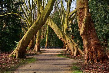 Bomen 20 van Edgar Schermaul