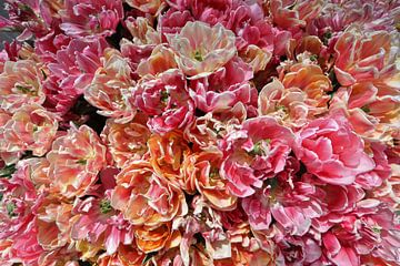 Tulpenpracht von Monique Visser