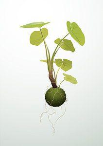 Hangende kokedama plant illustratie van Ebelien