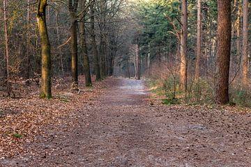 Bos in Lage Vuursche in maart