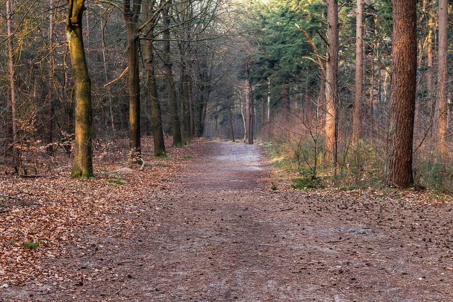 Bos in Lage Vuursche in maart van Jaap Mulder